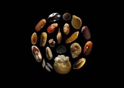 des semences